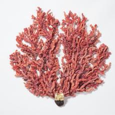 """Vascular Coral"""