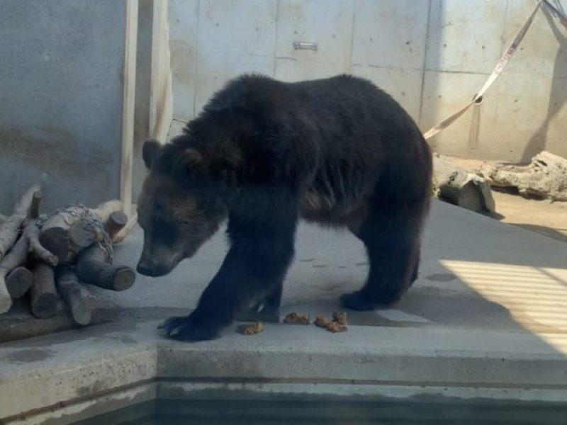かみね動物園 熊