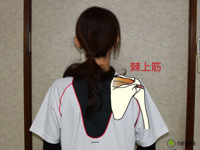 肩セラバンド棘上筋