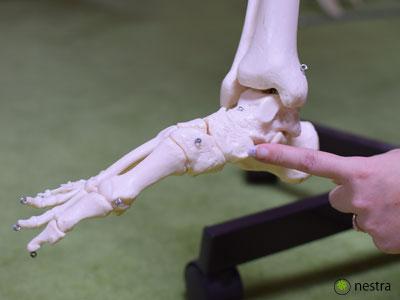 外脛骨の位置1