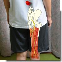 足の付け根が痛いとき股関節にどんな問題があるのかまず自分で簡単に検査してみよう!