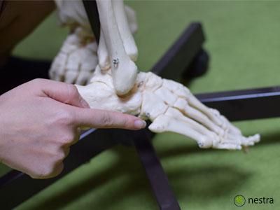 腓骨筋付着部1