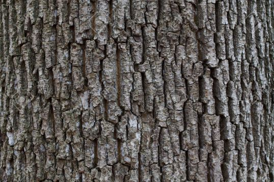 http://www.123rf.com/photo_11161090_wrinkled-dark-bark-of-the-tree-in-autumn-forest.html