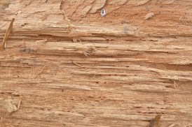 http://www.myfreetextures.com/three-great-fresh-rough-cut-or-chopped-wood-textures/