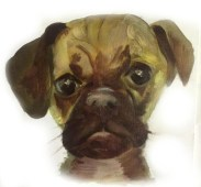 dog_3_pet_portrait