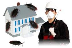 Kalinga Pest Control