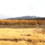 Beautiful autumn nature in Nasu
