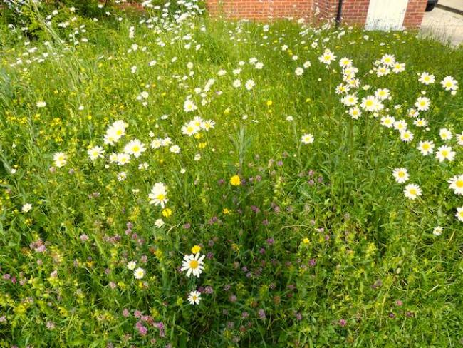 The meadow now