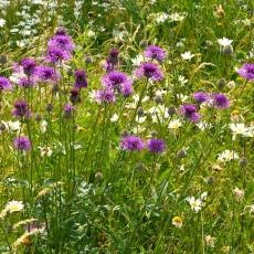 Jo's Mini Meadow 1 – How I Transformed My Lawn Into a Beautiful NearbyWild