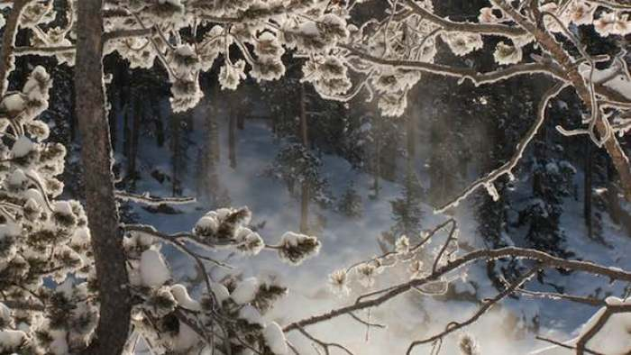 snow frost trees