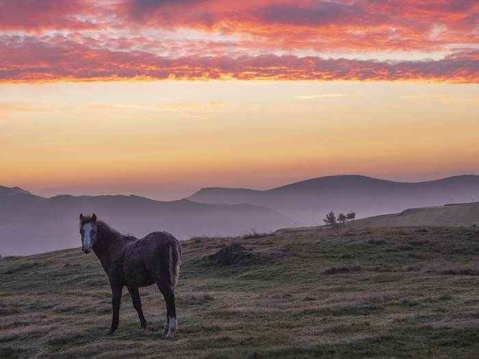 Dawn pony - Long Mynd