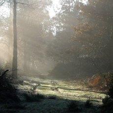misty winter woodland