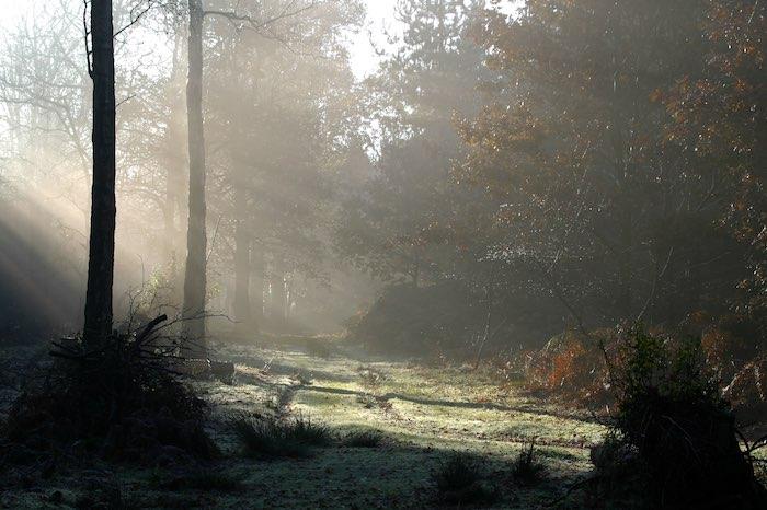 Rector's Wood winter woodland