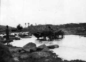 Cow cart crossing a river