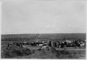 A refugee community. The refugees are traveling by wagon with a few large animals. Location unknown.