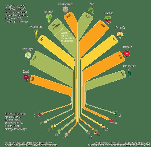 food-variety-tree-RAFI-USA
