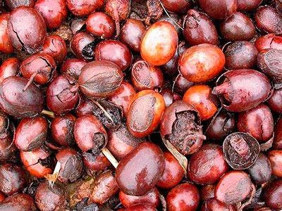 Beurre de karité: beurre de Butyrospermum parkii