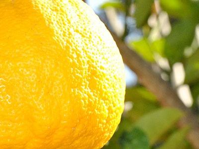 Aceite esencial de limón: Citrus Limonum Essential Oil