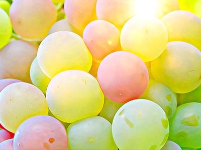 Aceite de semilla de Uva : Vitis Vinifera (Grape) Seed Oil