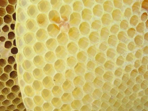 Cire d'abeille blanche: cire d'alba