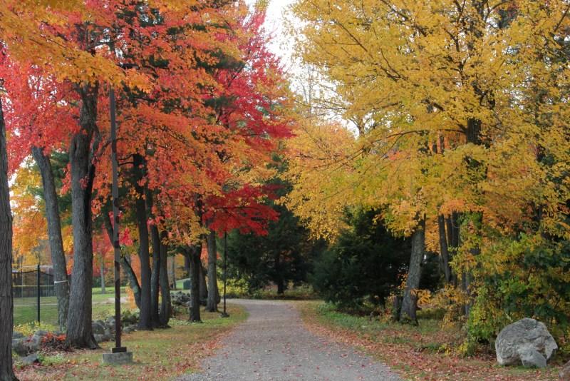trees on walkway