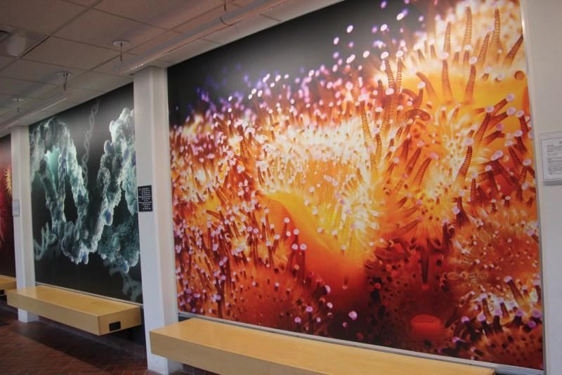 Cosmos photos in science building