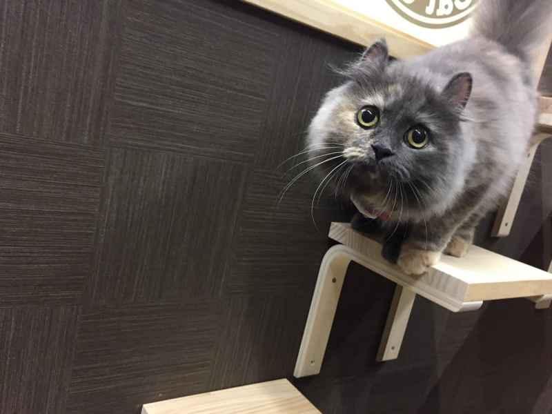 猫喫茶 空陸家 池袋西口店