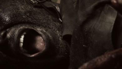 Photo of [VIDEOS] LEONS MASSACRE (DEU) «Bound together» (Video clip oficial)