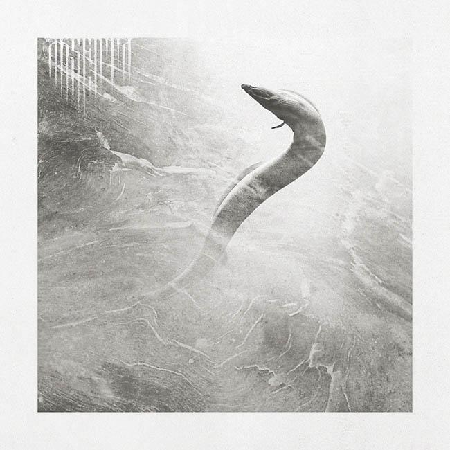 Absenta - eel - web