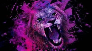 Photo of [CRÍTICAS] GROOVENOM (DEU) «Pink lion» DIGIPACK 2016 (Noizgate Records)