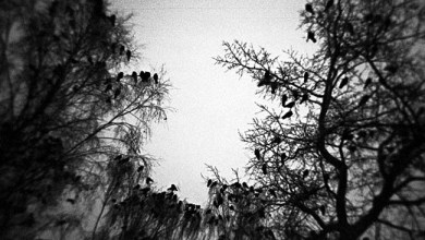 Photo of [CRÍTICAS] VIDIAN (POL) «A piece of the end» CD EP 2016 (Arachnophobia records)