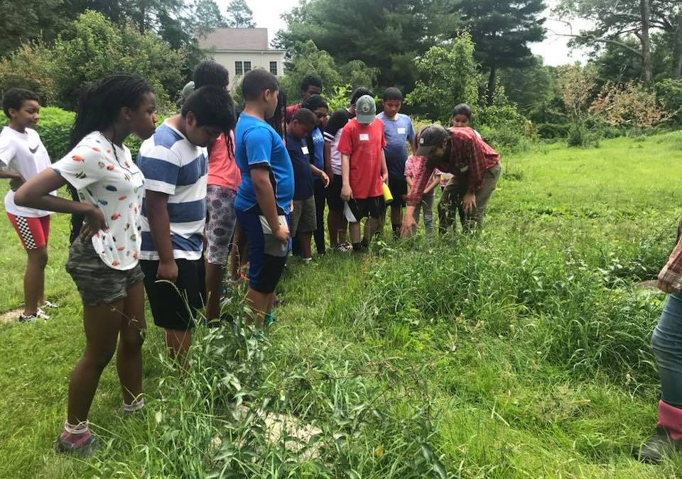 NECS Takes to the Woods With Six-Week Nature Connection Camp