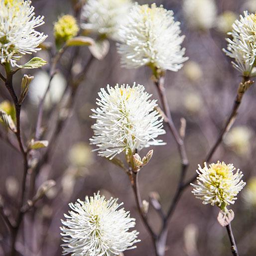white-flowers2