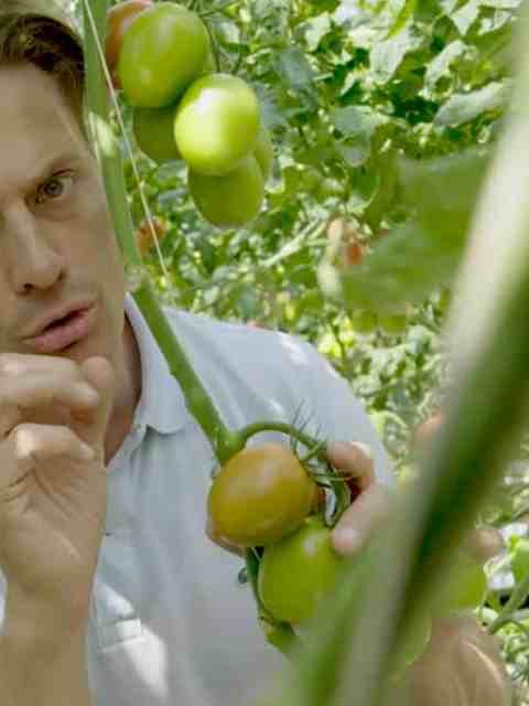 Intense tomaat bewaren