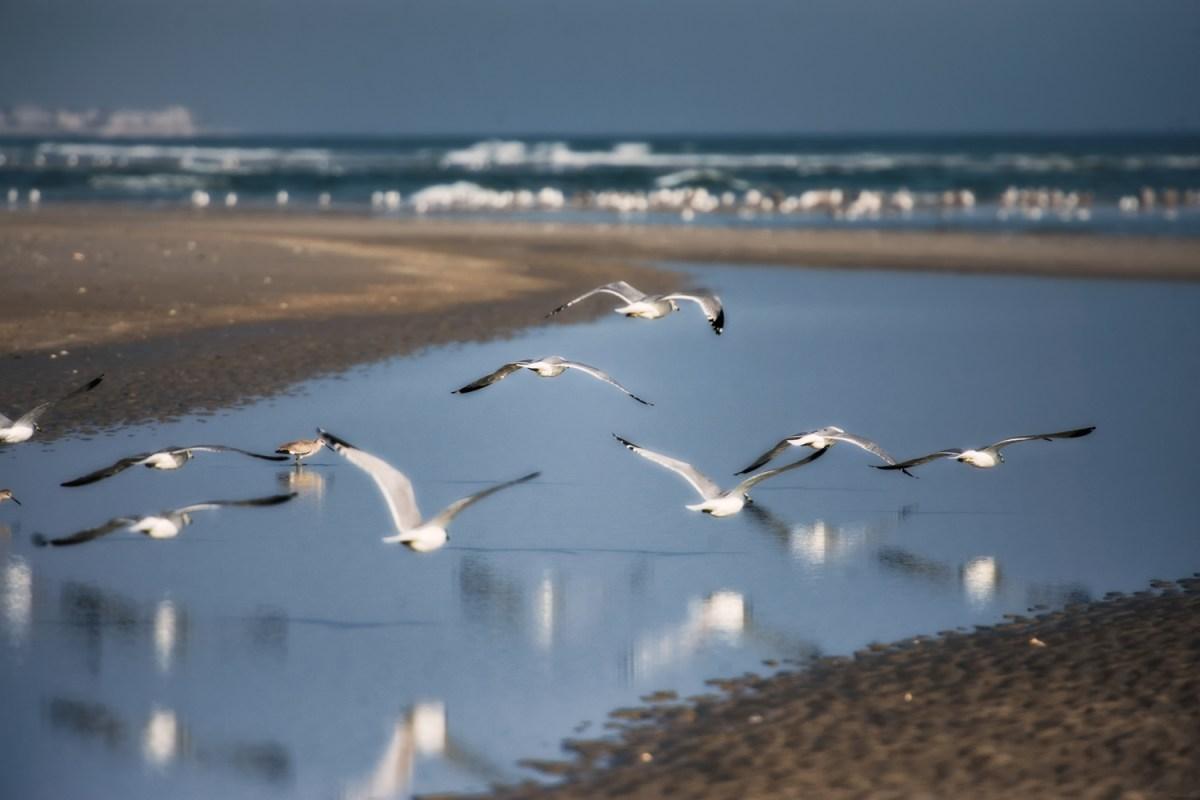 Floating Gulls