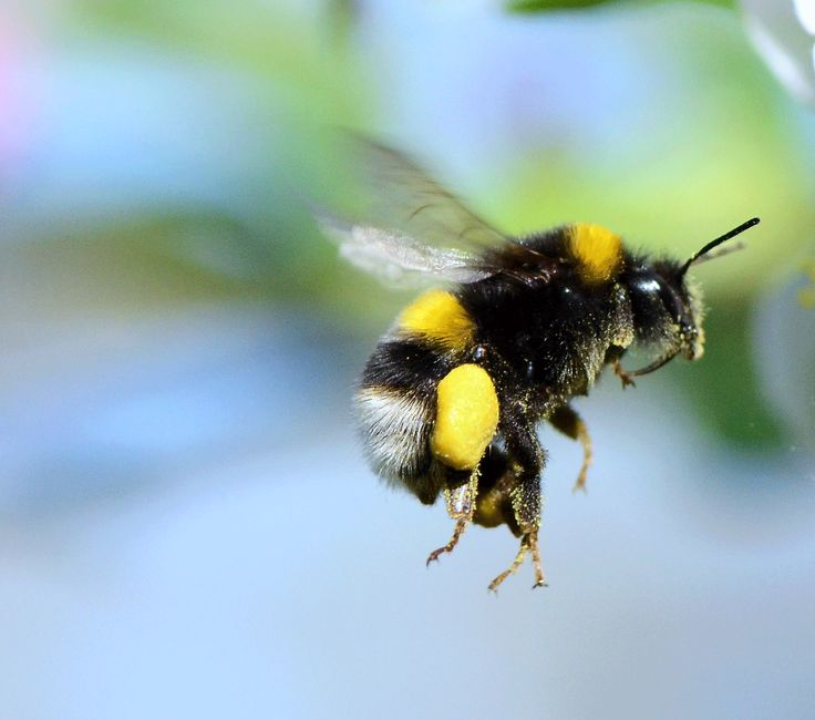 Poem: Bumblebees Are Made of Ash