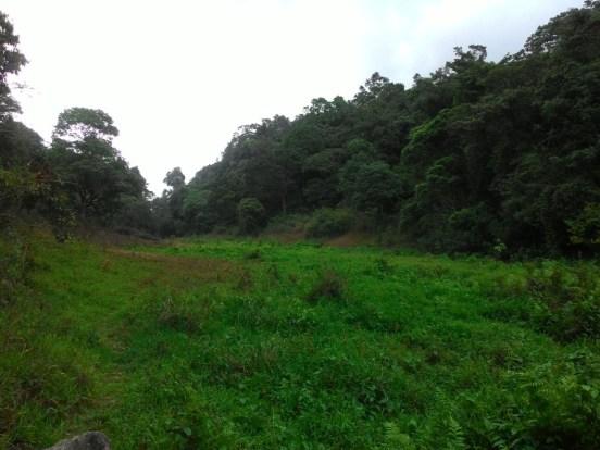 പുല്പ്രദേശം