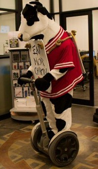 Chick-Fil-A cow on a Segway