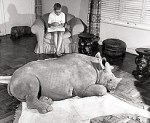 Rupert the Rhino: It's Almost Like a Live Action Far Side