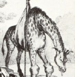 APB for George IV's Giraffe