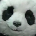 Your Monday Morning Mental Sorbet: This Panda is More WWE Than WWF