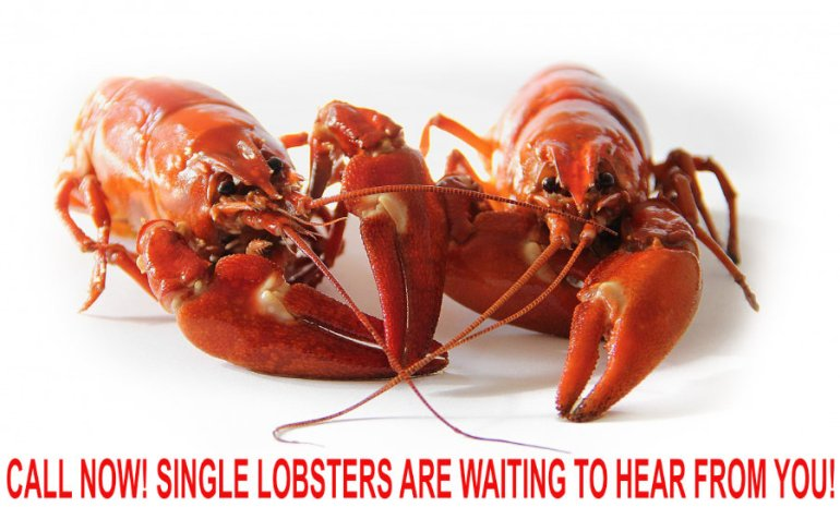 Call Now! Single Lobsters Are Waiting to Hear From You!