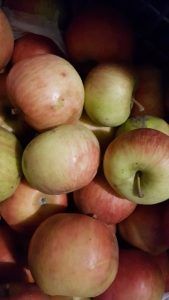 How to Store Whole Fresh Apples From the Orchard for Winter