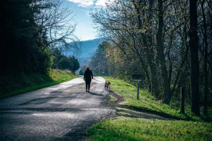 woman walking dog on country road mailbox trees mountain Bonding And Rewarding Your Pooch