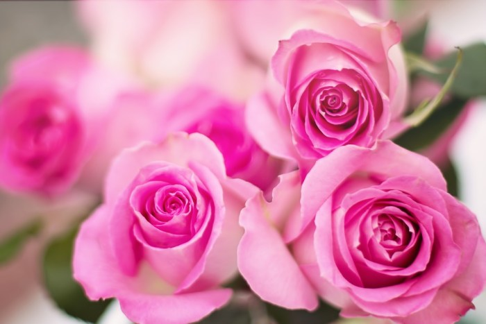 pink roses Wedding Anniversary Gifts For The First Decade! 1st 2nd 3rd 4th 5th 6th 7th 8th 9th 10th Wedding Anniversary