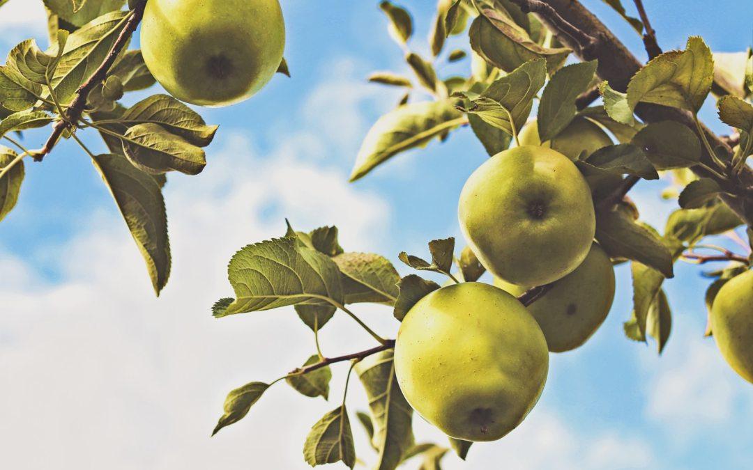 Low hanging fruits som företagen missar