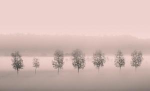 Mystical Tree Fog