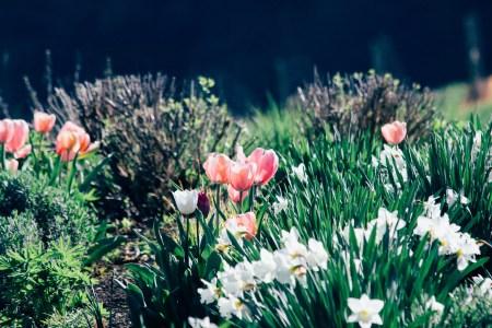 Penner-Ash Garden