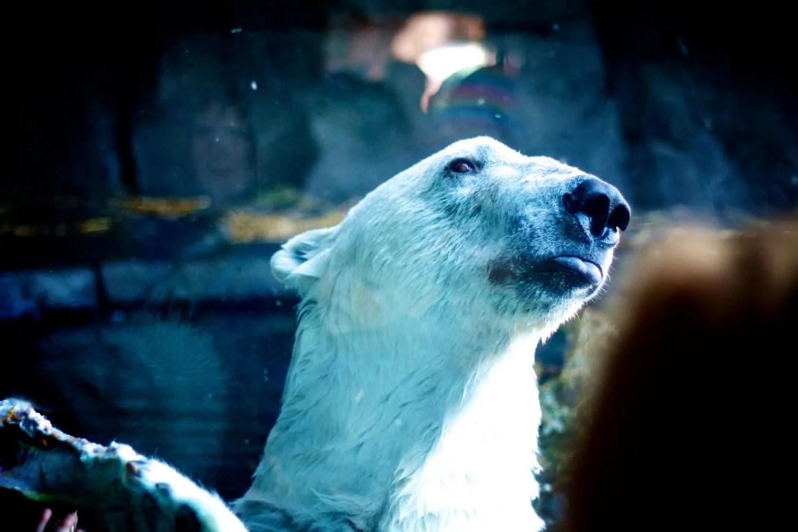 minneapolis-zoo-bear