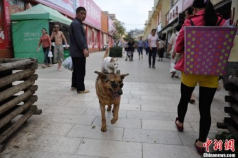 Gato-e-Cachorro-amigos-2